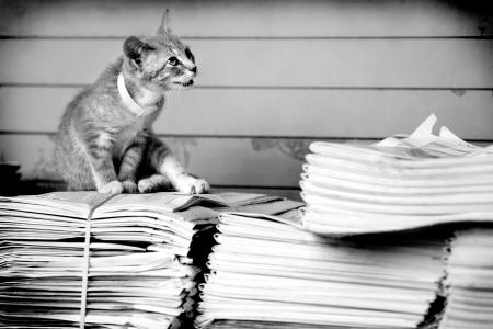 Cat and Newspapers