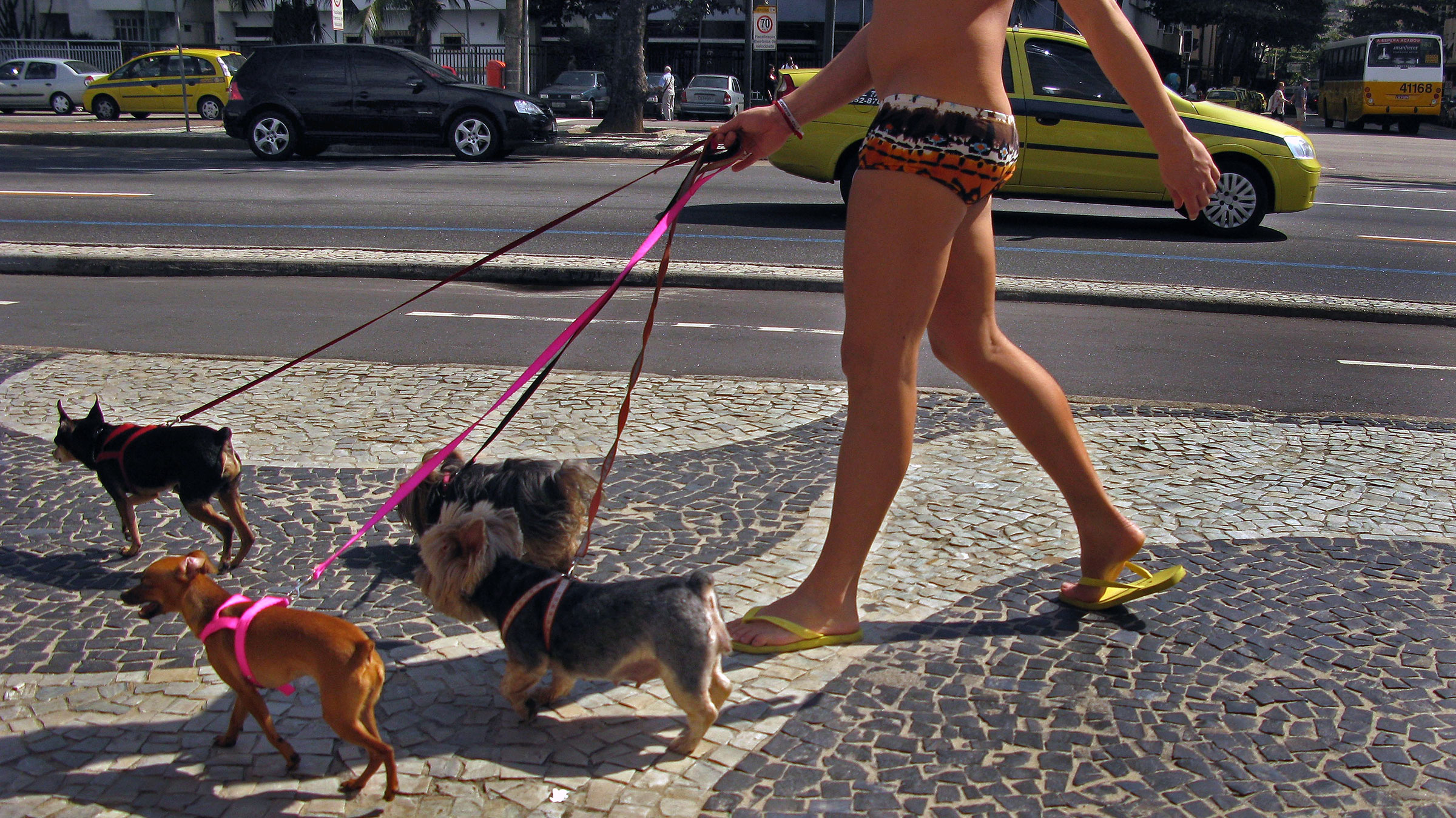 A man walking multiple dogs in Rio