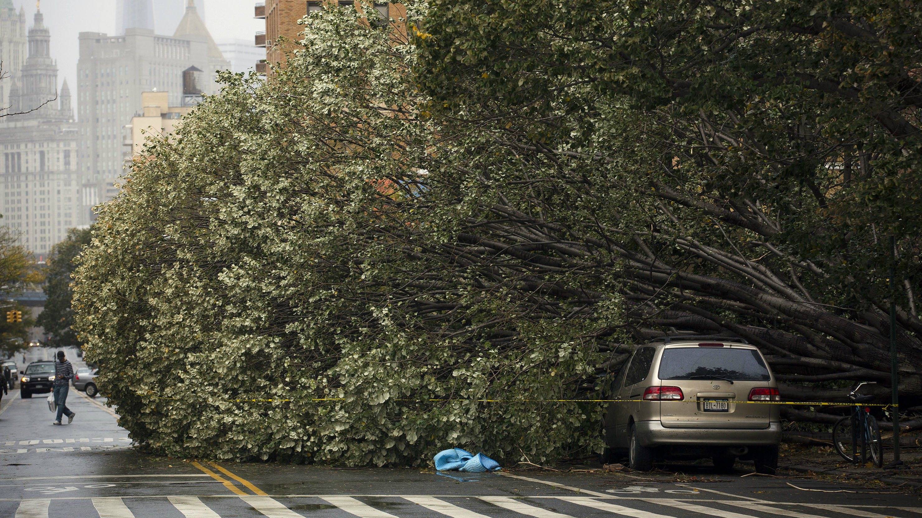 Tree in the Road after Hurricane Sandy