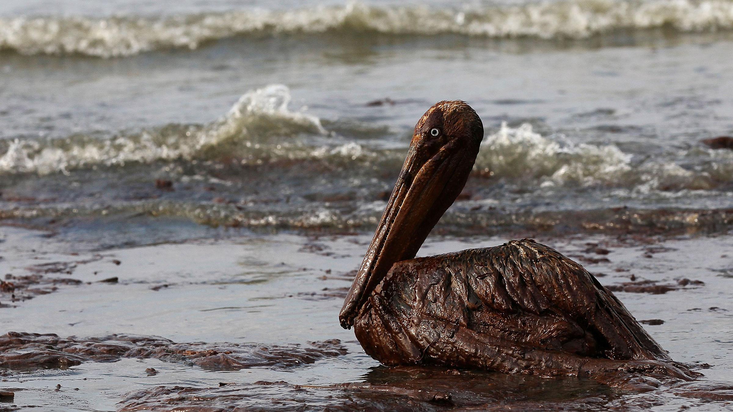 BP Gulf Bird