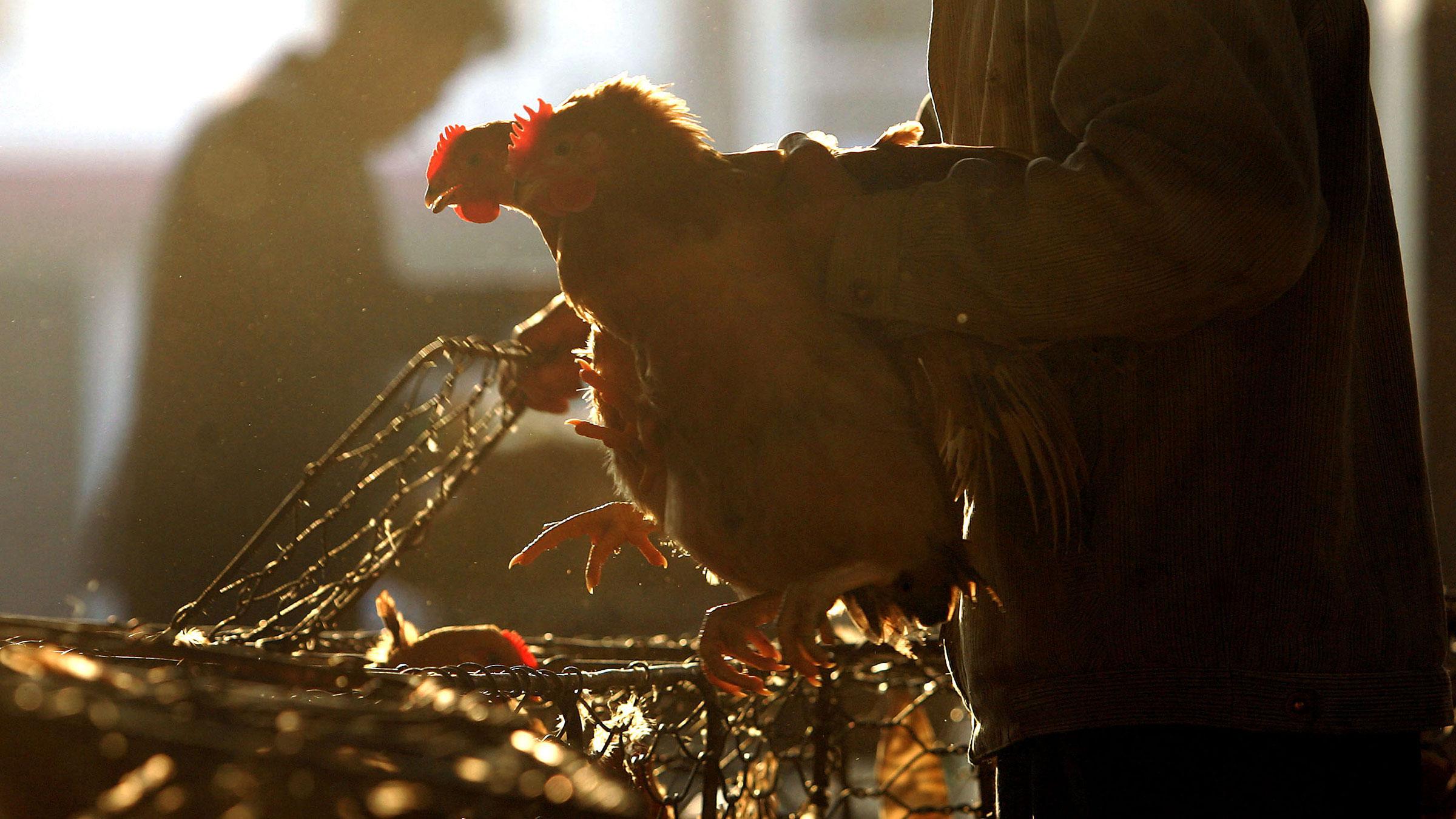 Chicken Market China 11192012
