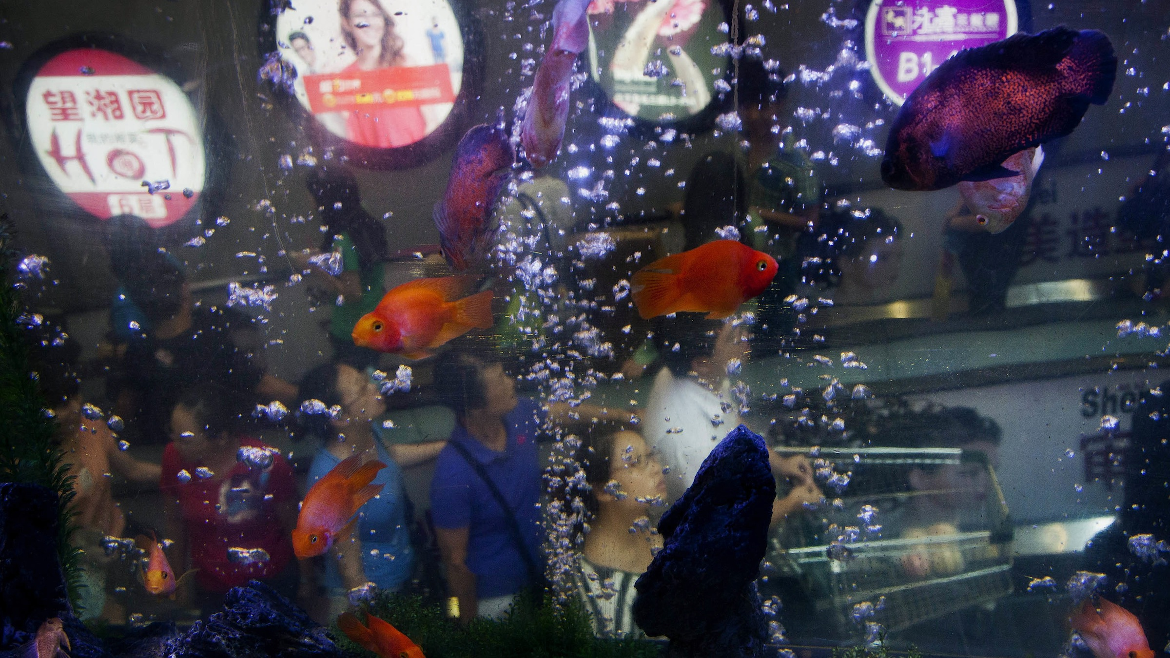 Chinese shoppers on an escalator passing by an aquarium installed inside a shopping mall to attract visitor in Beijing Thursday, Aug. 23, 2012. (AP Photo/Andy Wong)