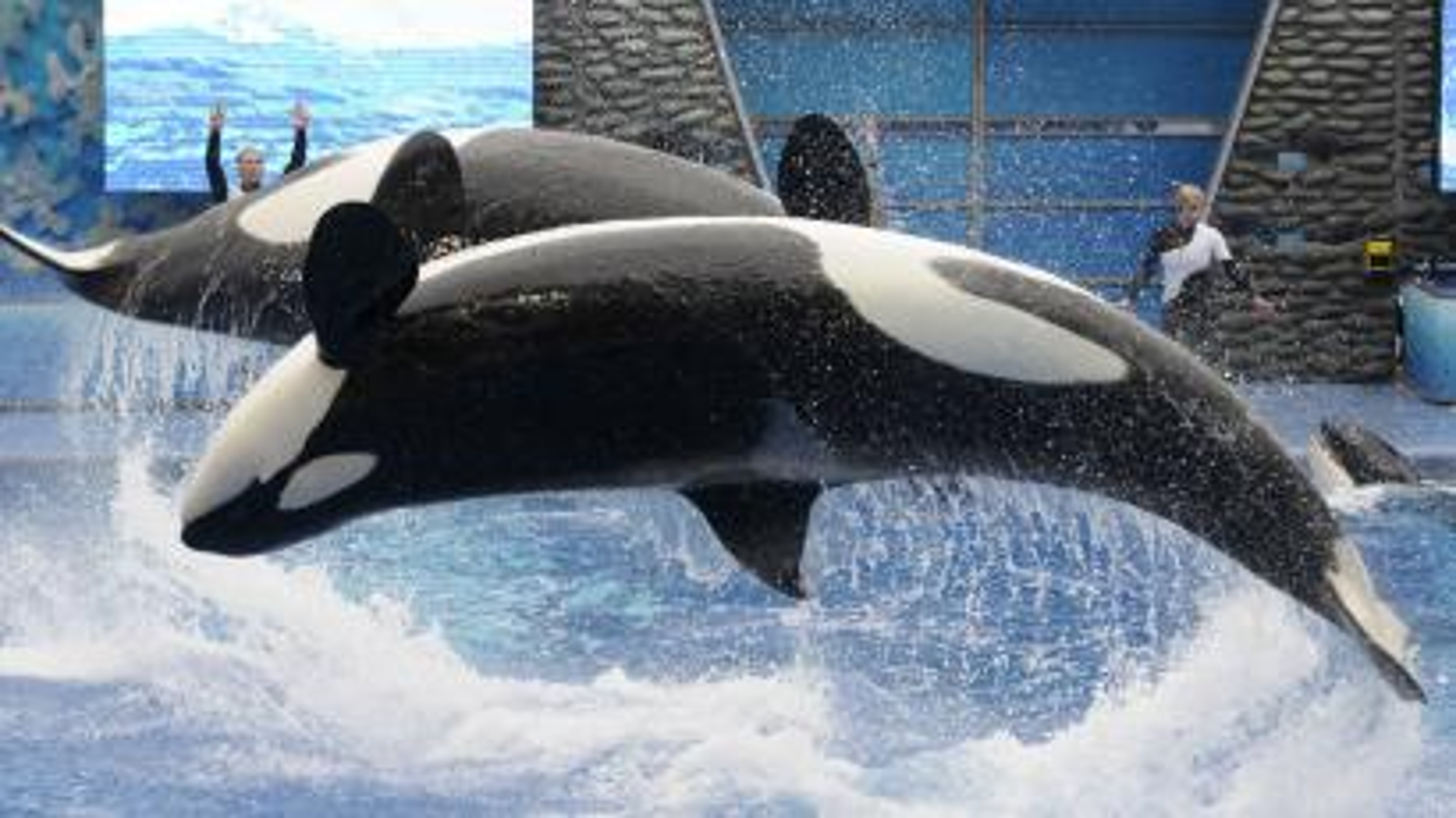 SeaWorld whales