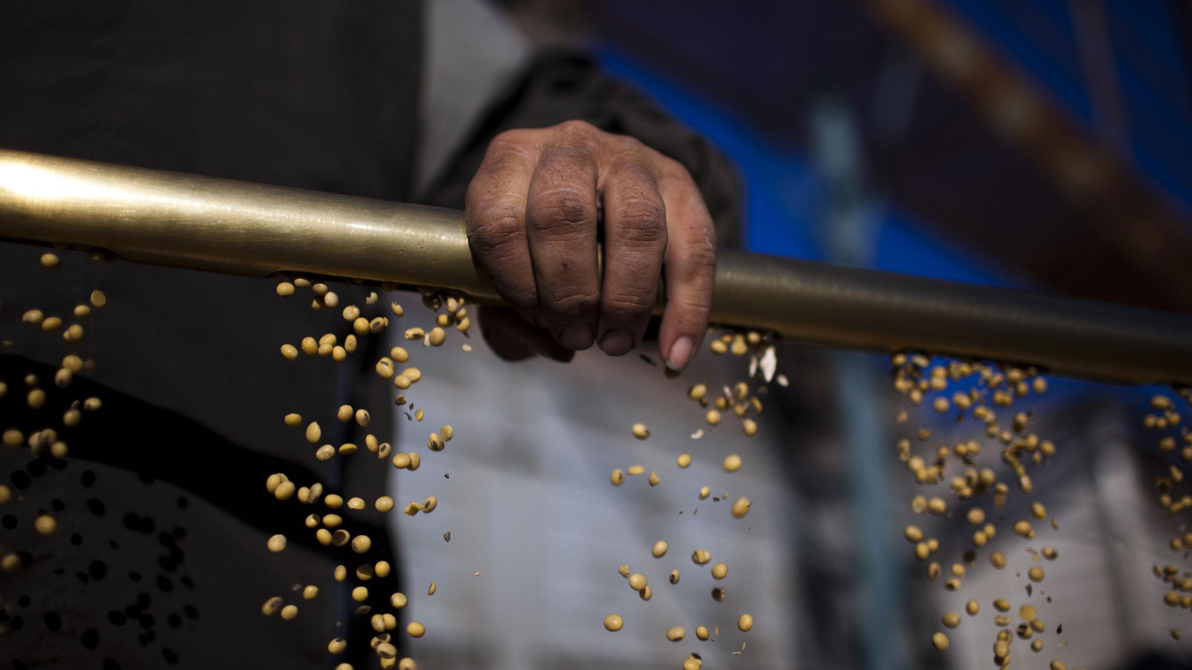 Monsanto Brazil soybeans