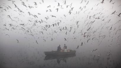 Indians feed birds from a boat on the River of Yamuna as it is enveloped by winter morning fog in New Delhi, India.