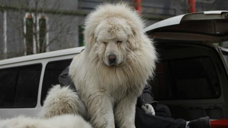 A big dog in China