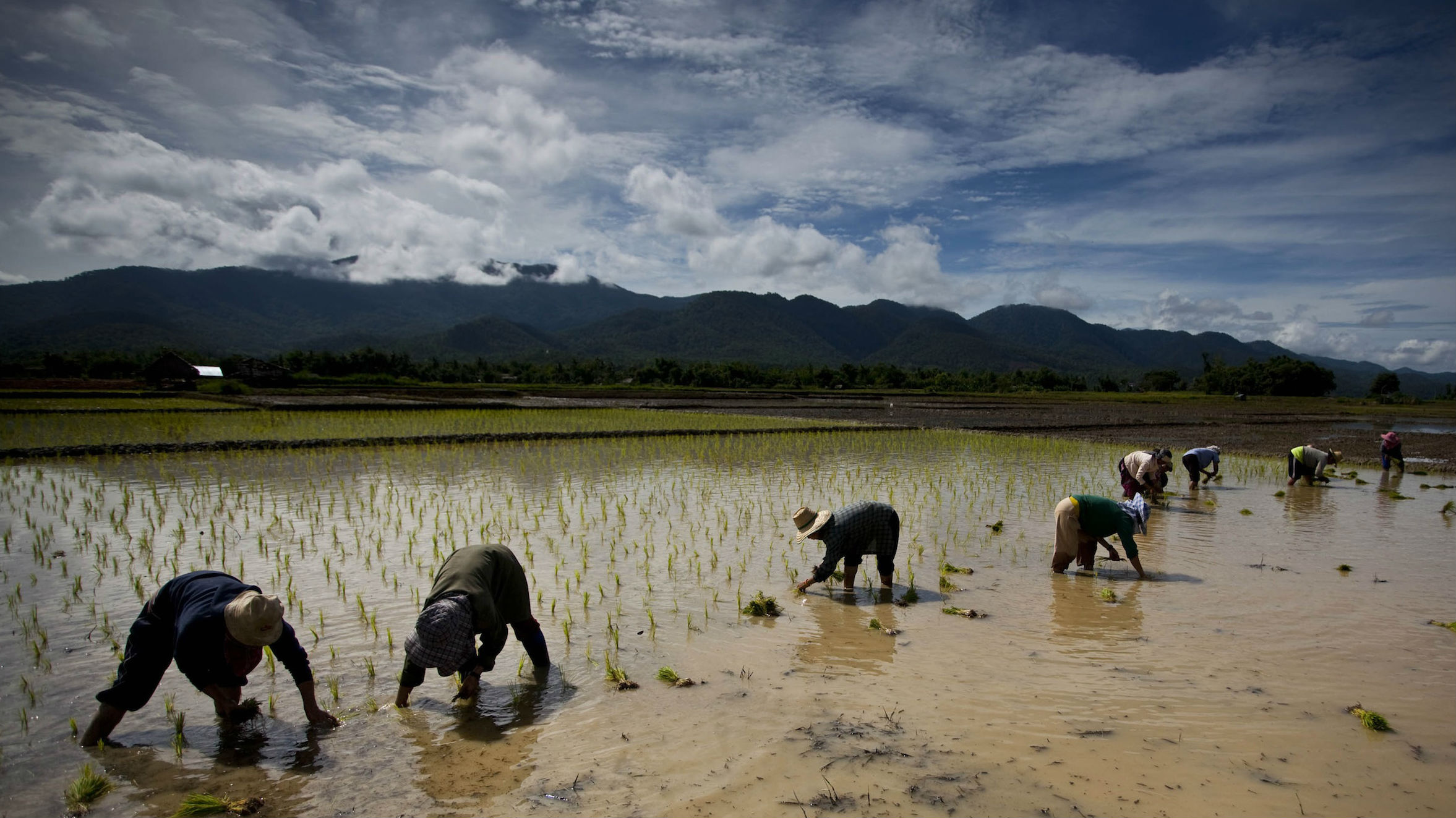 For now, Thailand's rice crop is destined for the warehouse.