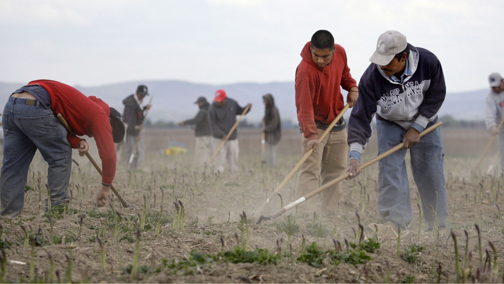In this file photo taken April 27, 2009, Latino workers till an asparagus field near Toppenish, Wash., on the Yakama Indian Reservation. Bringing unlikely allies together, a measure being backed by both farmers and immigrant advocacy groups is hoping to slow down the use of a federal immigration program that check's a workers eligibility to work in the U.S. Known as E-Verify, the program has been adopted by 11 cities in Washington state. (AP Photo/Elaine Thompson