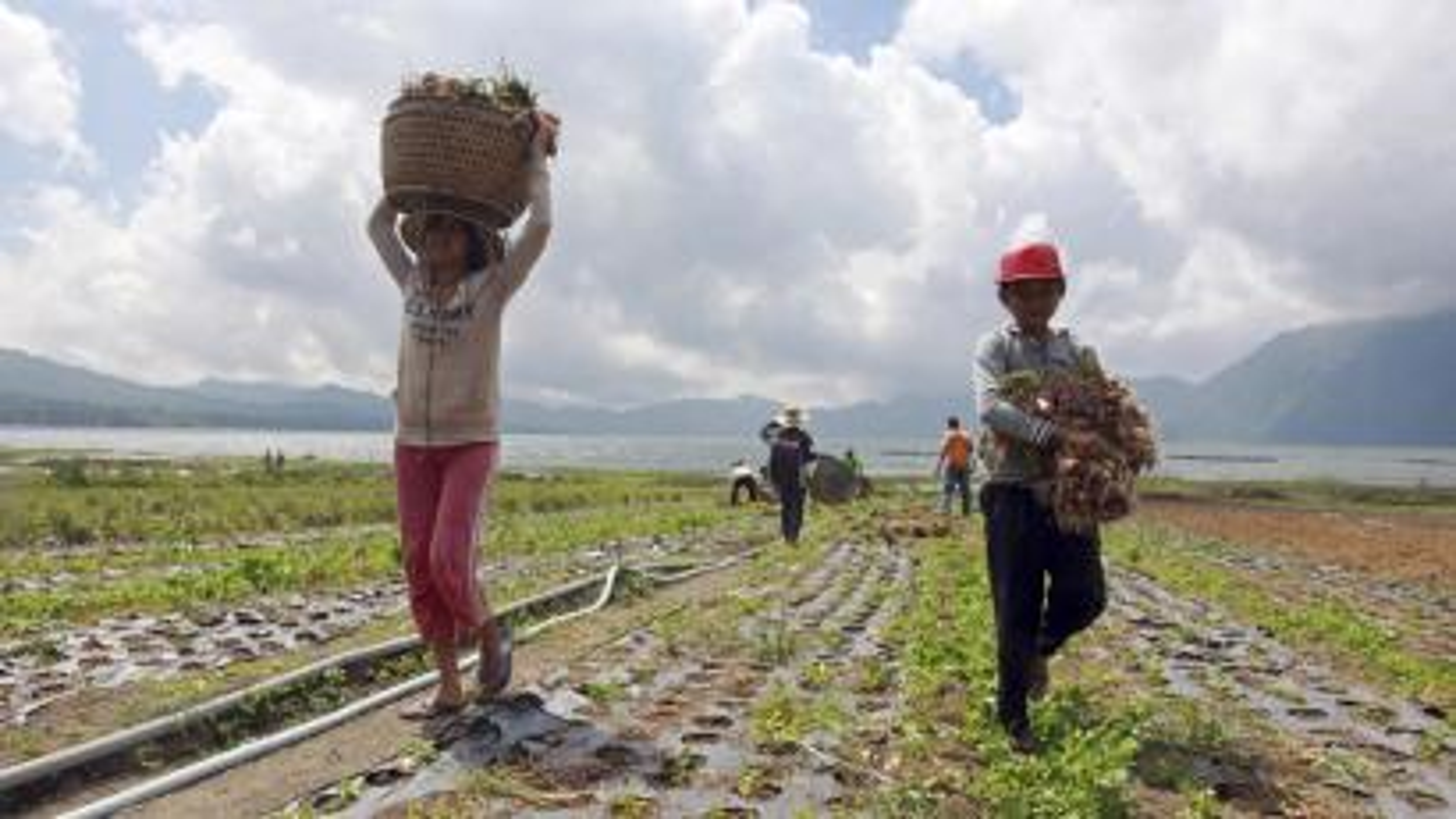 Indonesian Onion Farmers