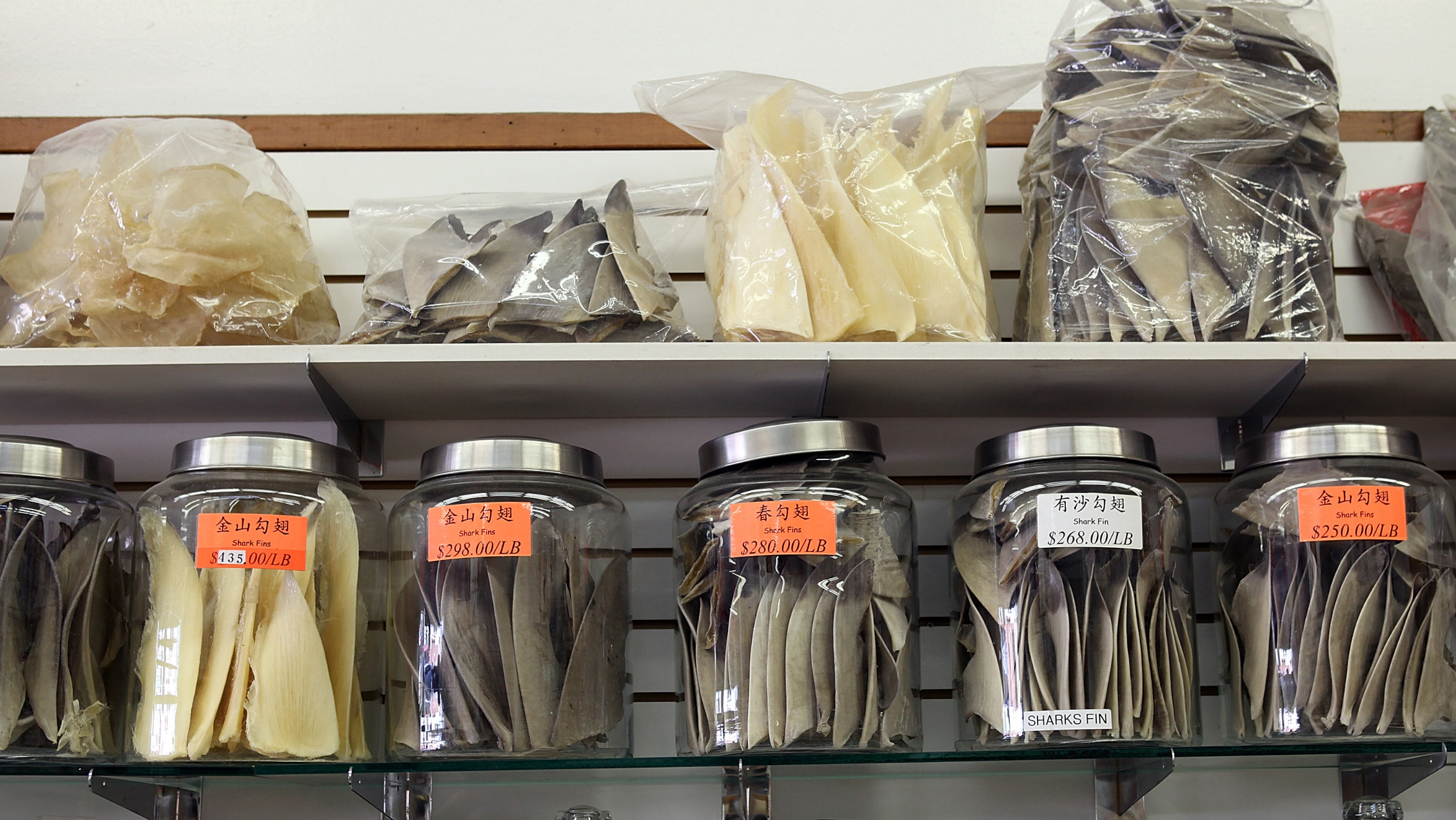 Glass containers filled with shark fins are displayed at a store in Chinatown on August 24, 2011 in San Francisco, California. California State Assembly Bill 376 has been introduced and would ban the sale, purchase or possession of shark fins in California starting on Jan. 1, 2013. Those against the bill complain that it targets a cultural institution of Chinese citizens who eat shark fin soup. (Photo by Justin Sullivan/Getty Images