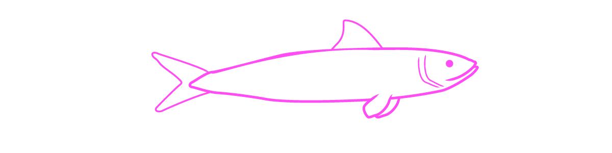 sardine_pink