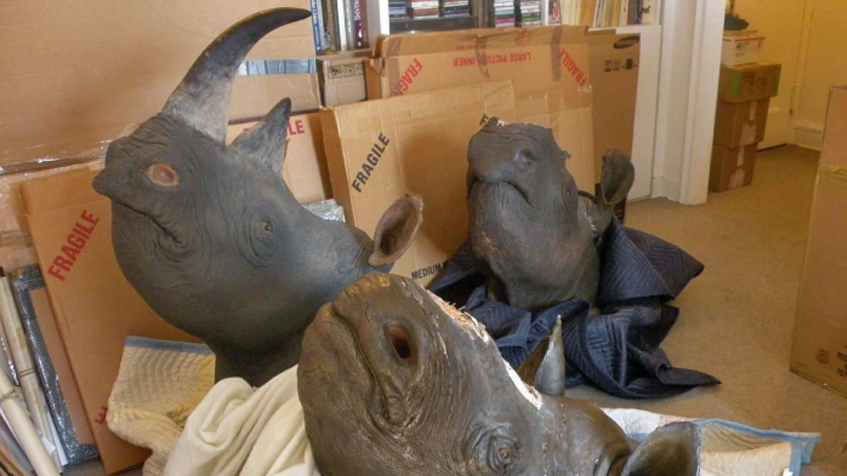 This photo provided by the United States Attorney's Office, on Tuesday, July 31, 2012, shows mounted rhinoceros heads seized in a crackdown on black market rhino horns. David Hausman, a New York City antiques dealer, pleaded guilty on Tuesday to charges he double-crossed wildlife protection authorities by first offering to help fight illegal sales of rhinoceros horns, then buying some himself. (AP Photo/United States Attorney's Office