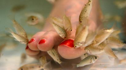 Tracy Roberts, 33, of Rockville, Md. has her toes nibbled on by a type of carp called garra rufa, or doctor fish, during a fish pedicure treatment at Yvonne Hair and Nails salon in Alexandria, Va. on Thursday July 17, 2008.