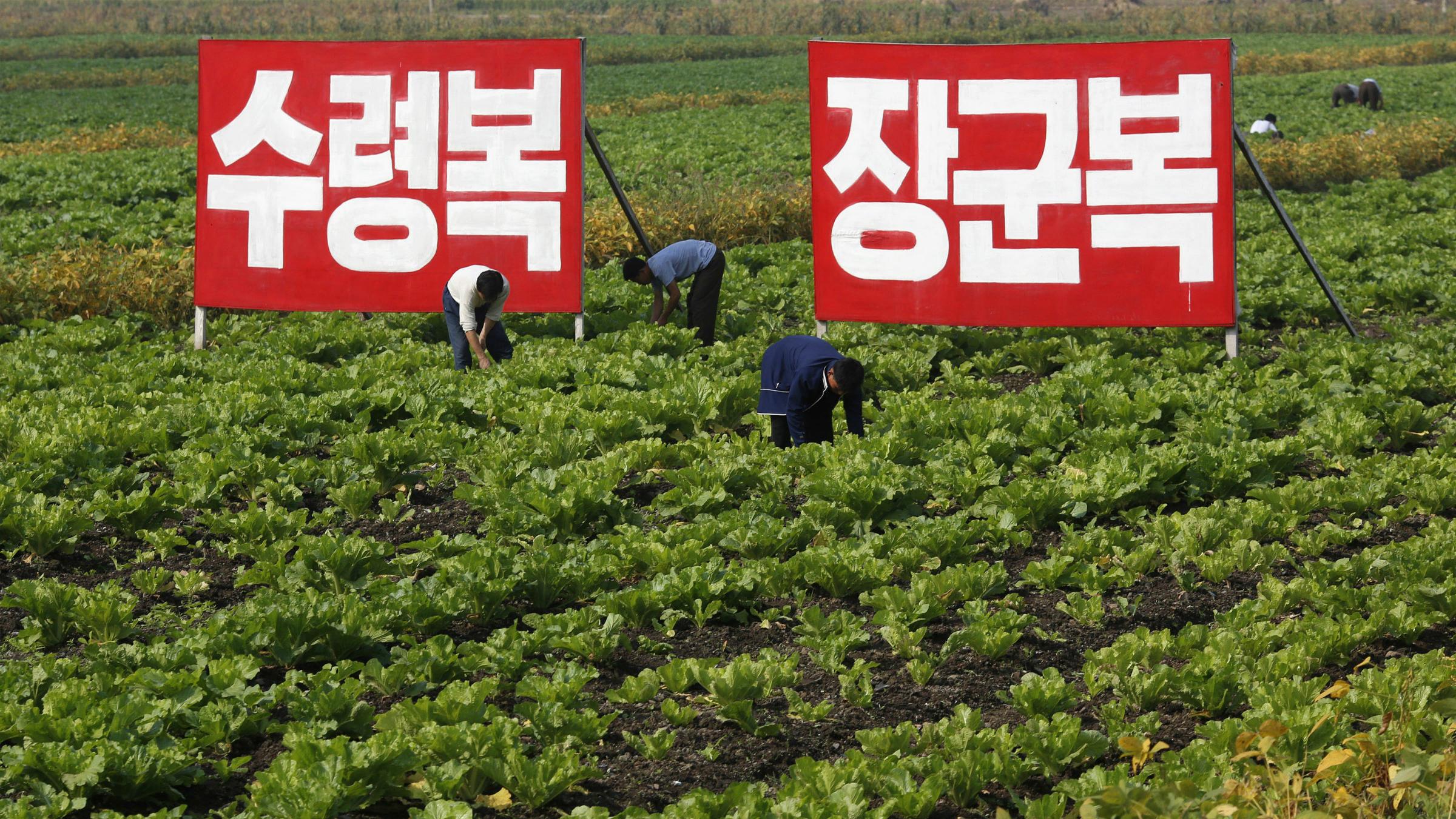 NorthKoreanFarm