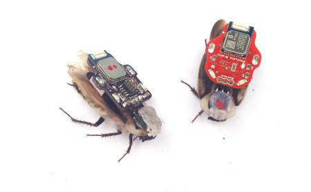 The controller is removable, and roaches go back to normal behavior quickly afterwards