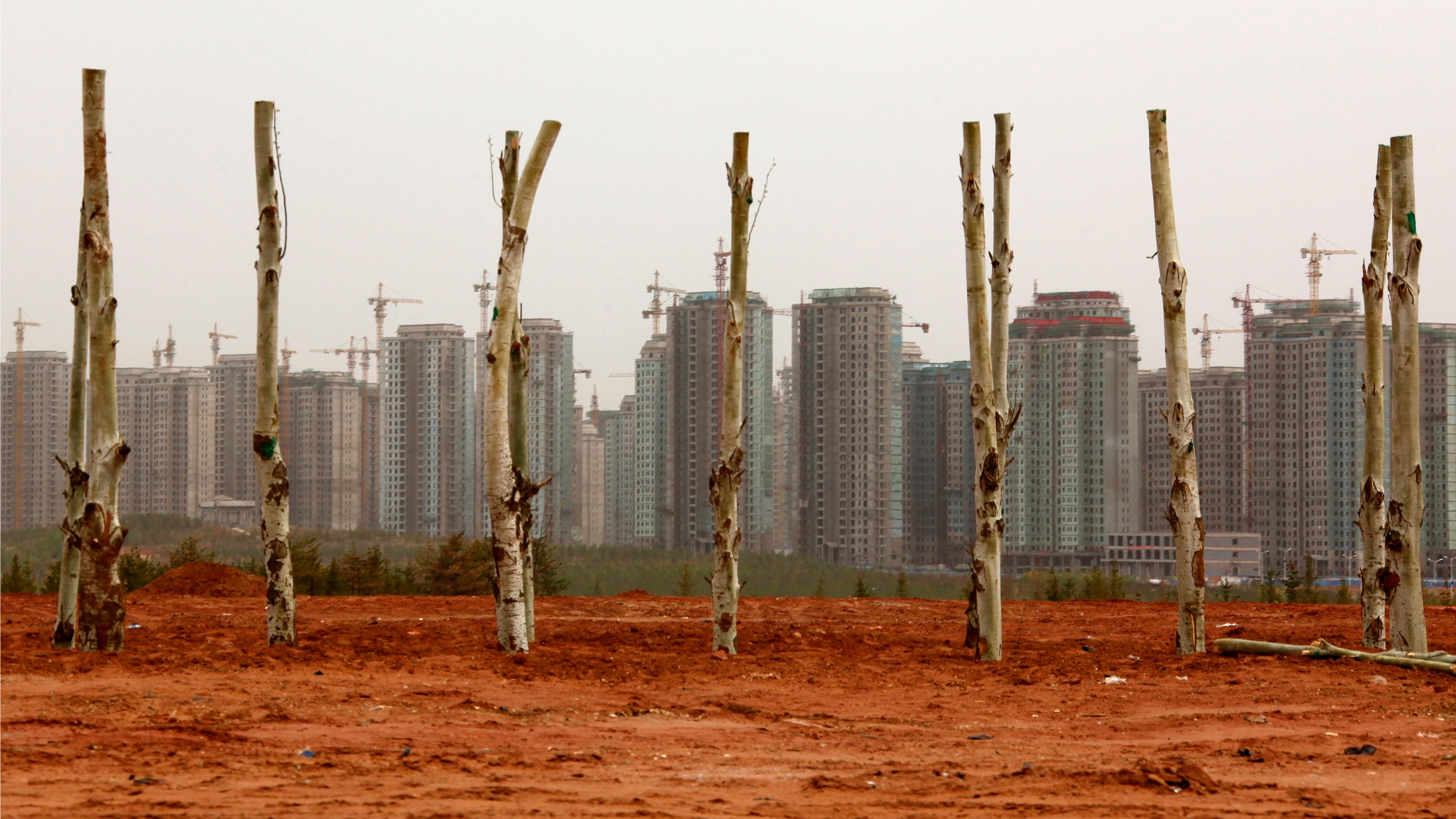 Newly planted trees line a new street in front of residential buildings under construction in the Kangbashi district of the town of Ordos. the estimated one million people that were expected to move into or visit the district's now decaying buildings, have yet to appear.