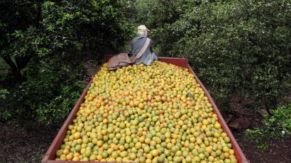 Truck full of oranges in Brazil.