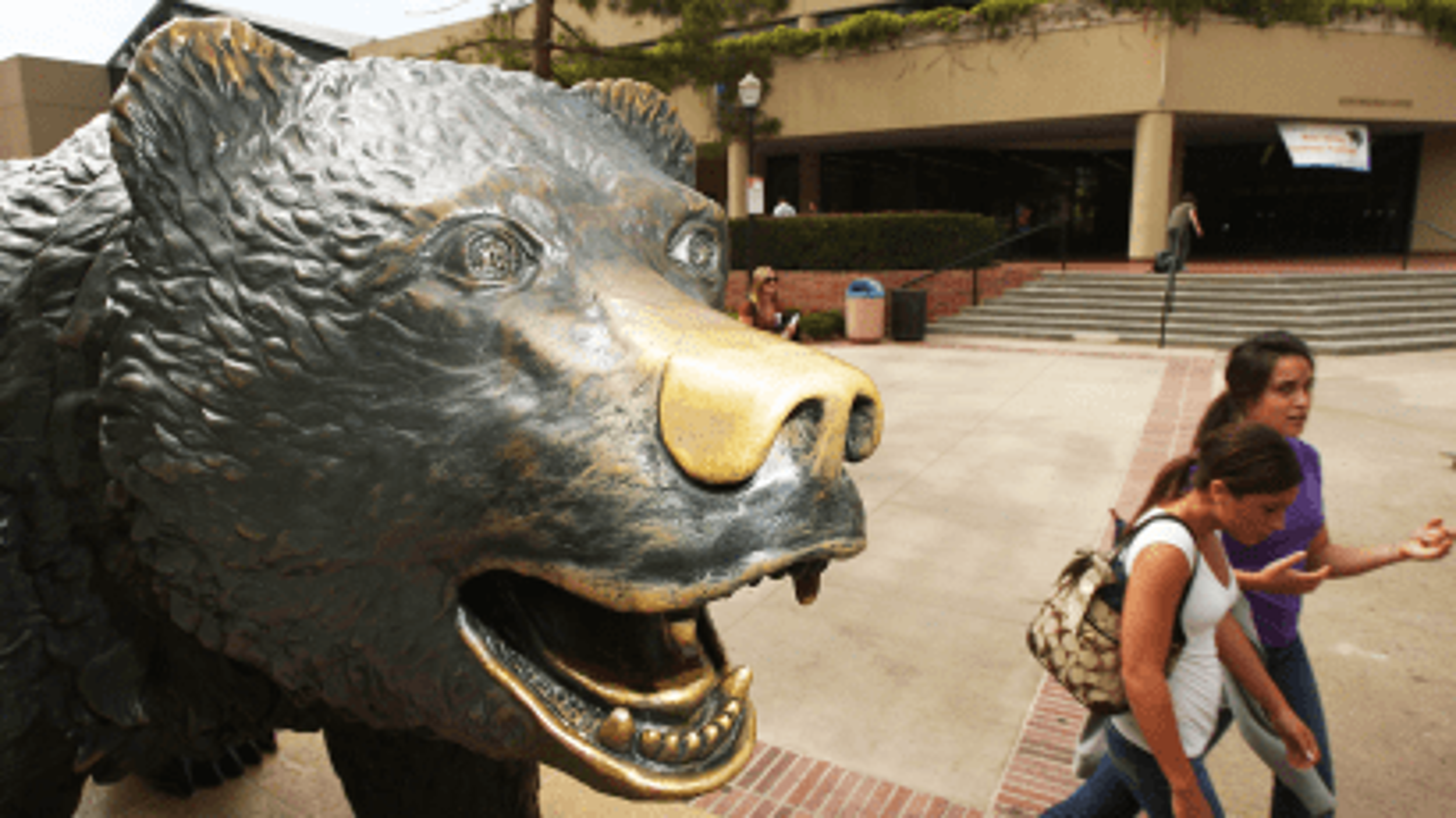Education: a bear necessity