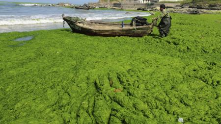 A fisherman pulls his boat across an algae-filled coastline in Qingdao, Shandong province June 9, 2013. Picture taken June 9, 2013. REUTERS/China Daily