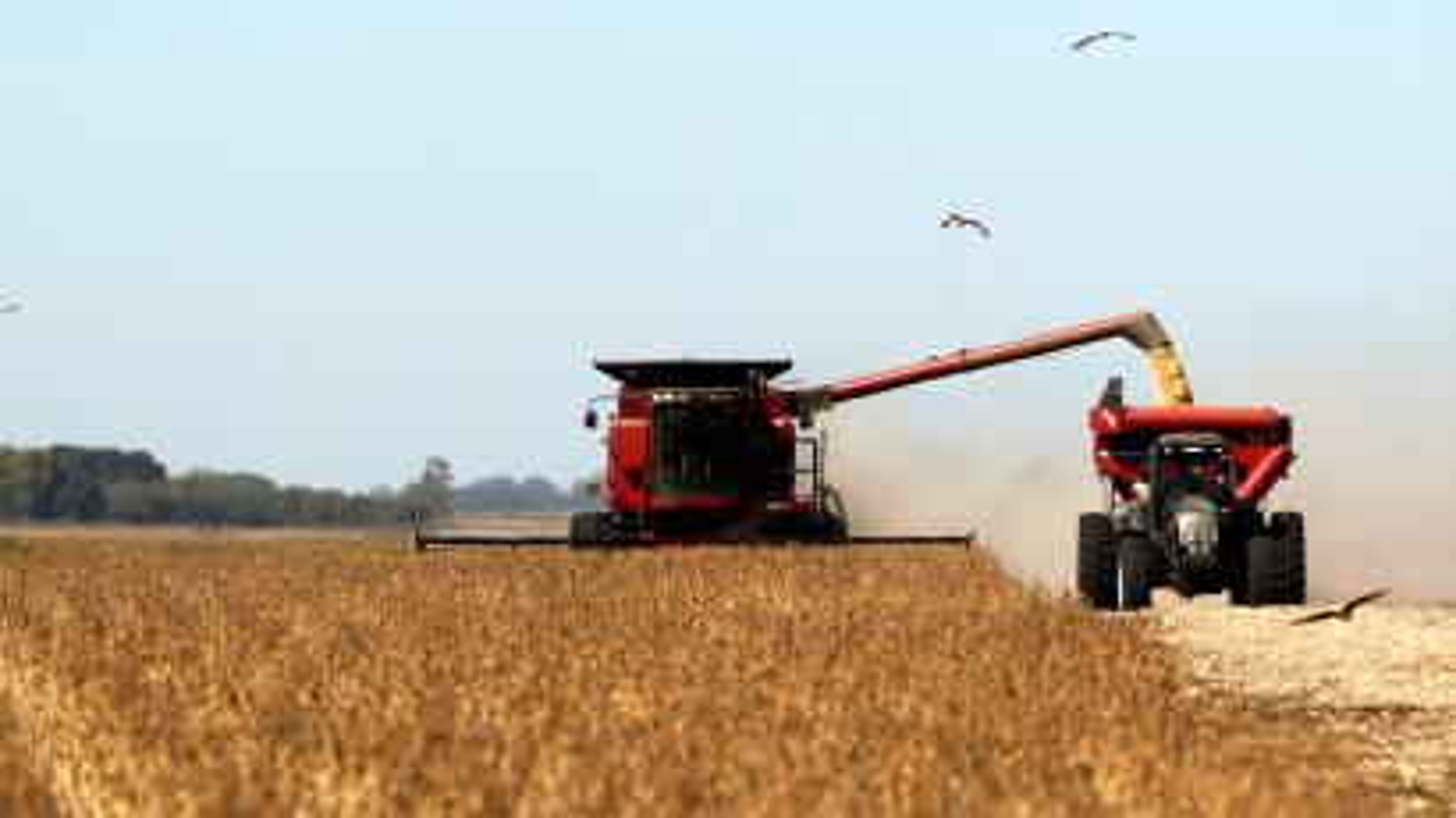 Argentina record harvest