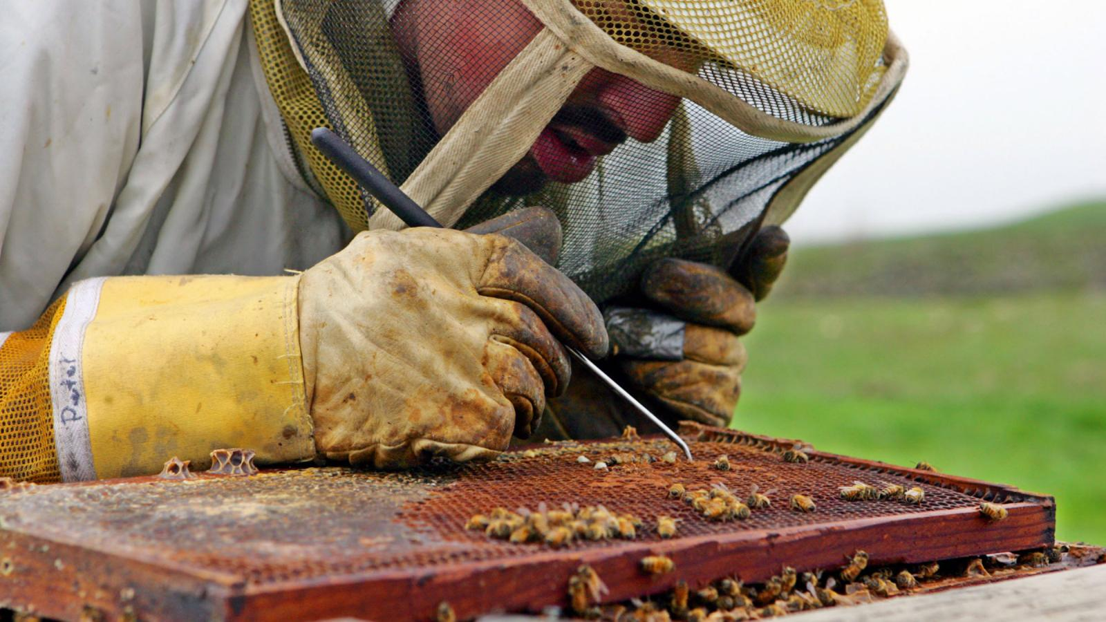 Scientists discover what's killing the bees and it's worse than you