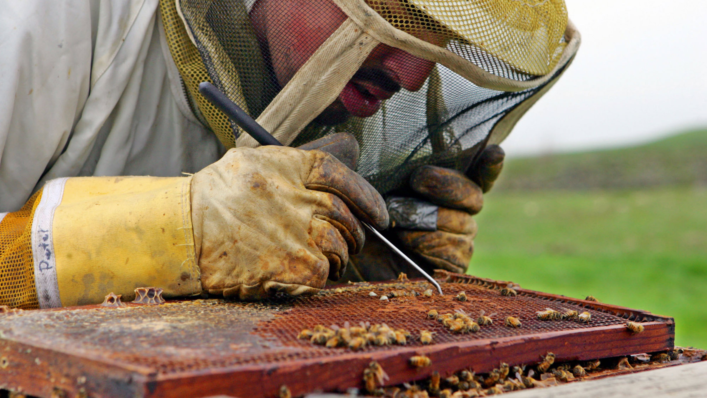 Scientists discover what's killing the bees and it's worse