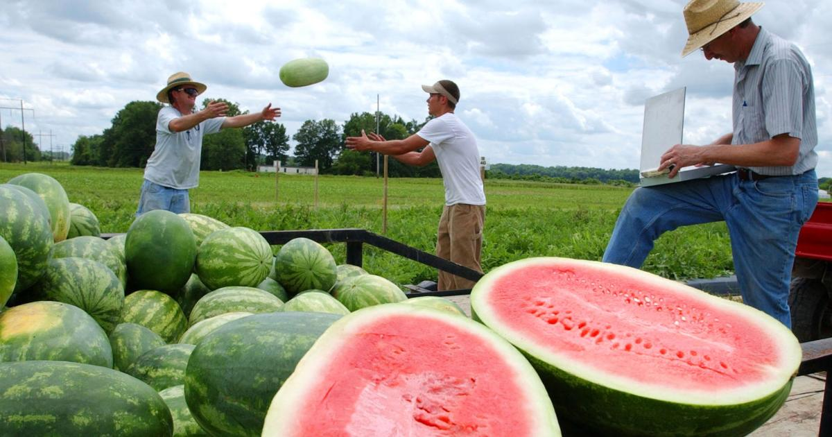 Let S Get Real About Seedless Watermelons They Have Seeds Quartz