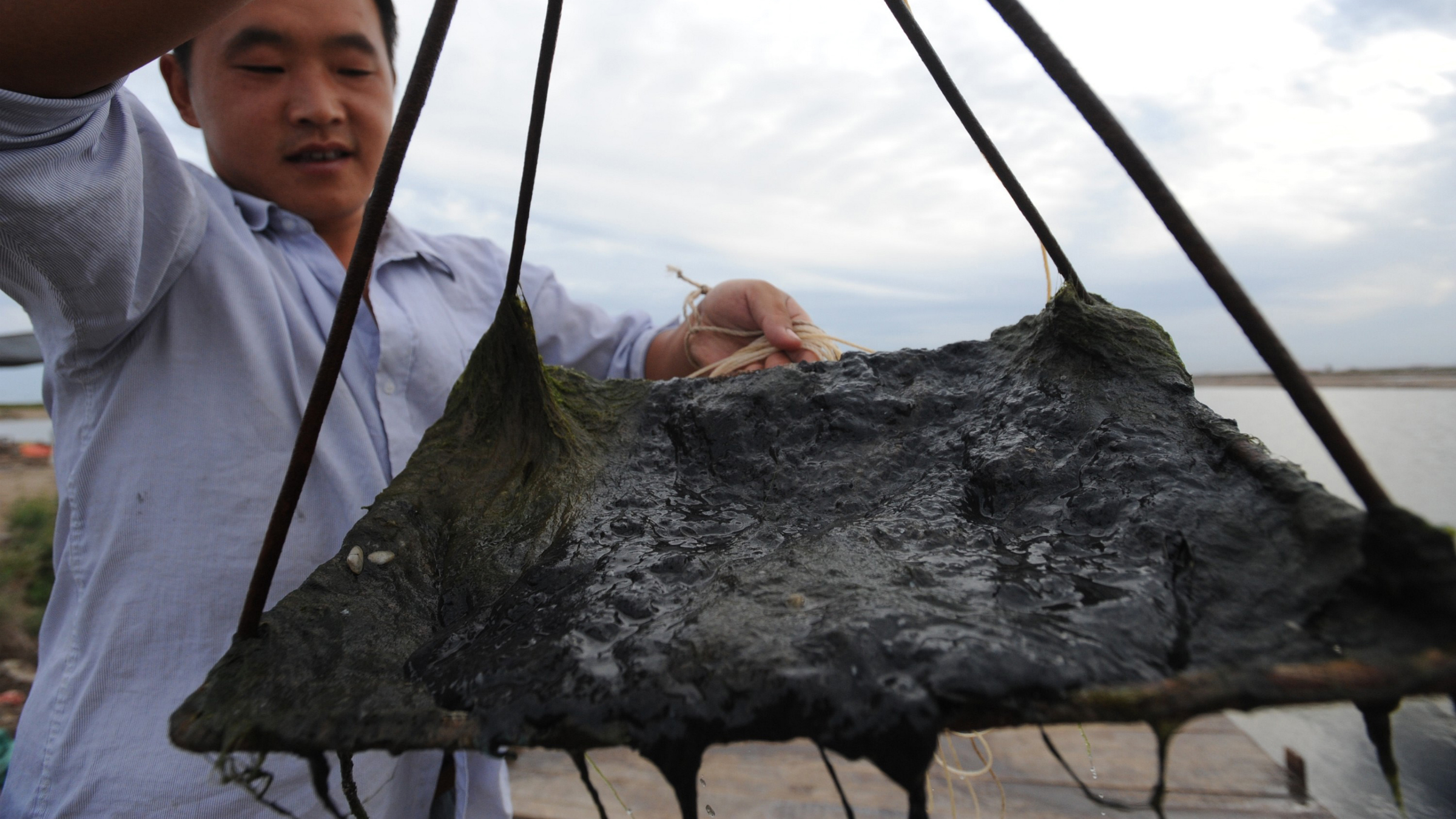 A man shows black oil slick in Tangshan, north Chinas Hebei province, 3 September 2011. Chinas coastal waters regulator on 2 September ordered ConocoPhillips to suspend production in the countrys largest off-shore oil field, citing negligence by the U.S. energy company in handling underwater leaks. The move by the State Oceanic Administration, which manages Chinese waters, rejects the Houston companys claims this week that it stopped oil leaks associated with spills reported in June.(Imaginechina via AP Images