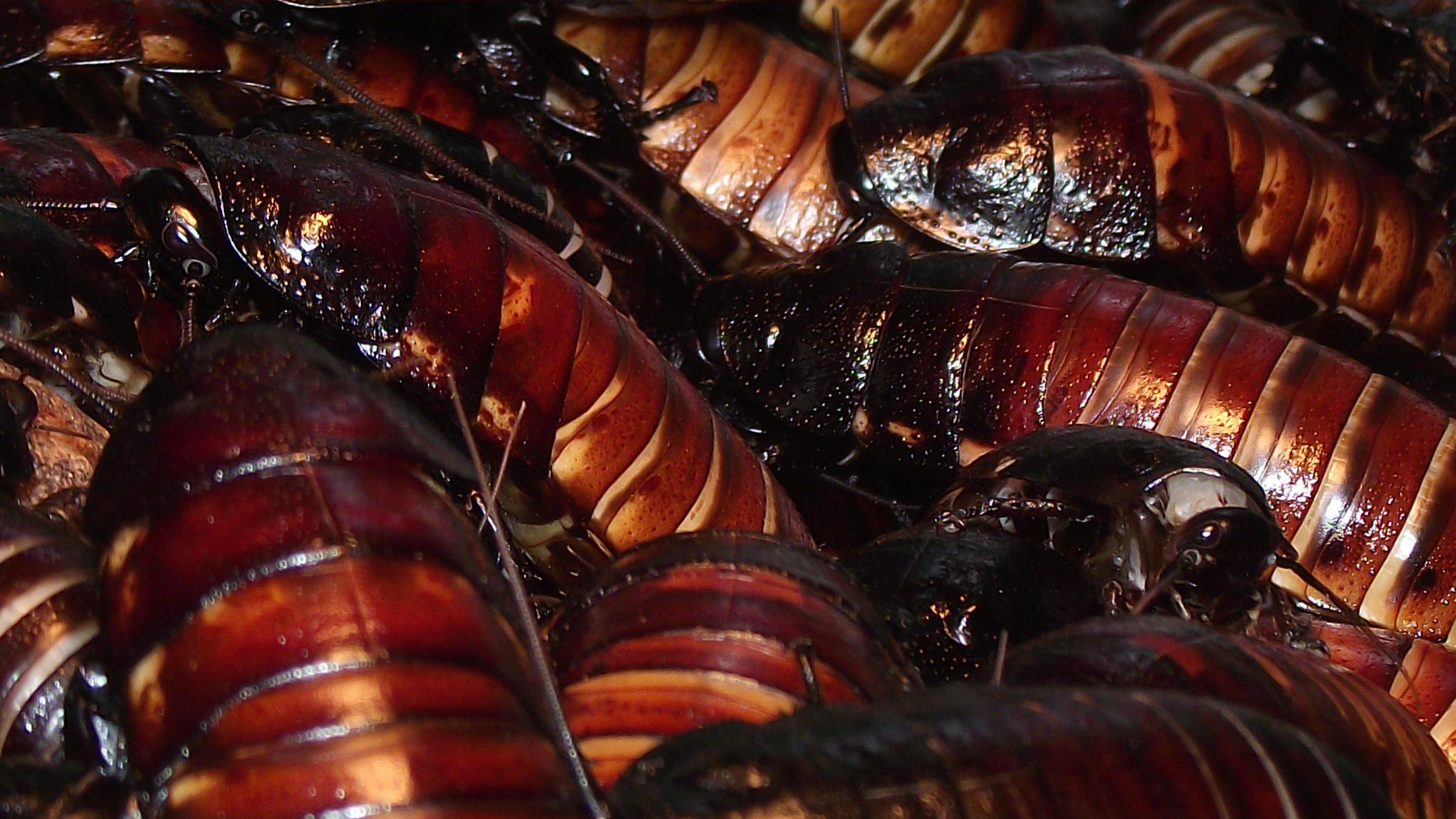 roaches2_2