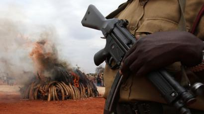 A warden stands guard as an illegal consignment of five tonnes of Ivory confiscated from smugglers is destroyed during the African Elephant Law Enforcement Day in Tsavo West National Park, 380 km (236 miles) east of capital Nairobi July 20, 2011. The confiscated consignment, recovered from smugglers in Singapore in 2002, originated from poaching activities in both Zambia and Malawi, government officials said. REUTERS/Noor Khamis