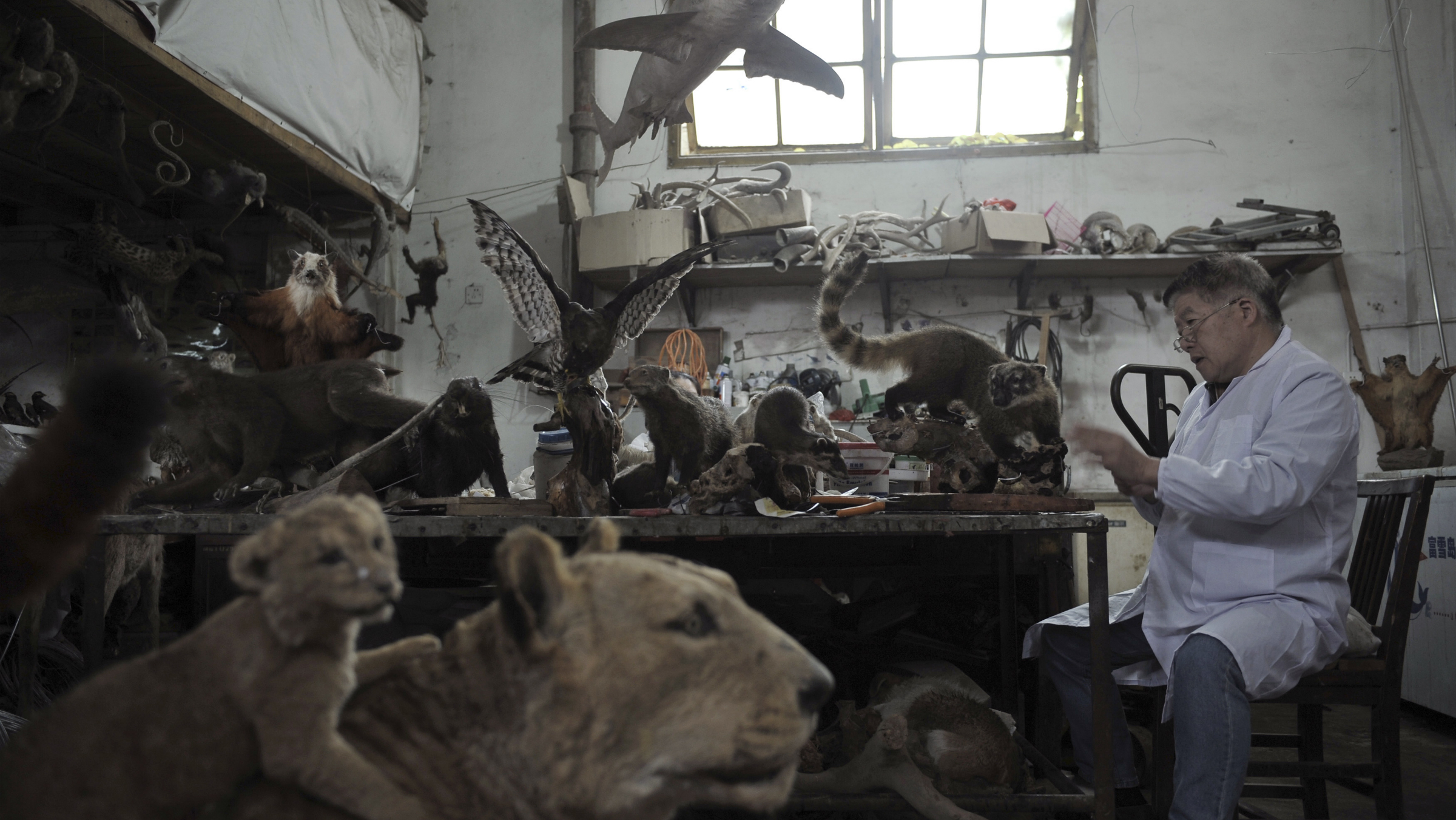 An employee checks a specimen of a squirrel monkey at an animal specimen factory in Fuzhou, Fujian province April 9, 2012. The factory collects animal carcasses from zoos all over China, carefully separates out and preserves the animal skins and furs, and stuffs them with straws or plastic foam to make specimens. There are currently more than 1,000 specimens in the factory, most of which will be sold to museums and schools, local media reported. REUTERS/China Daily