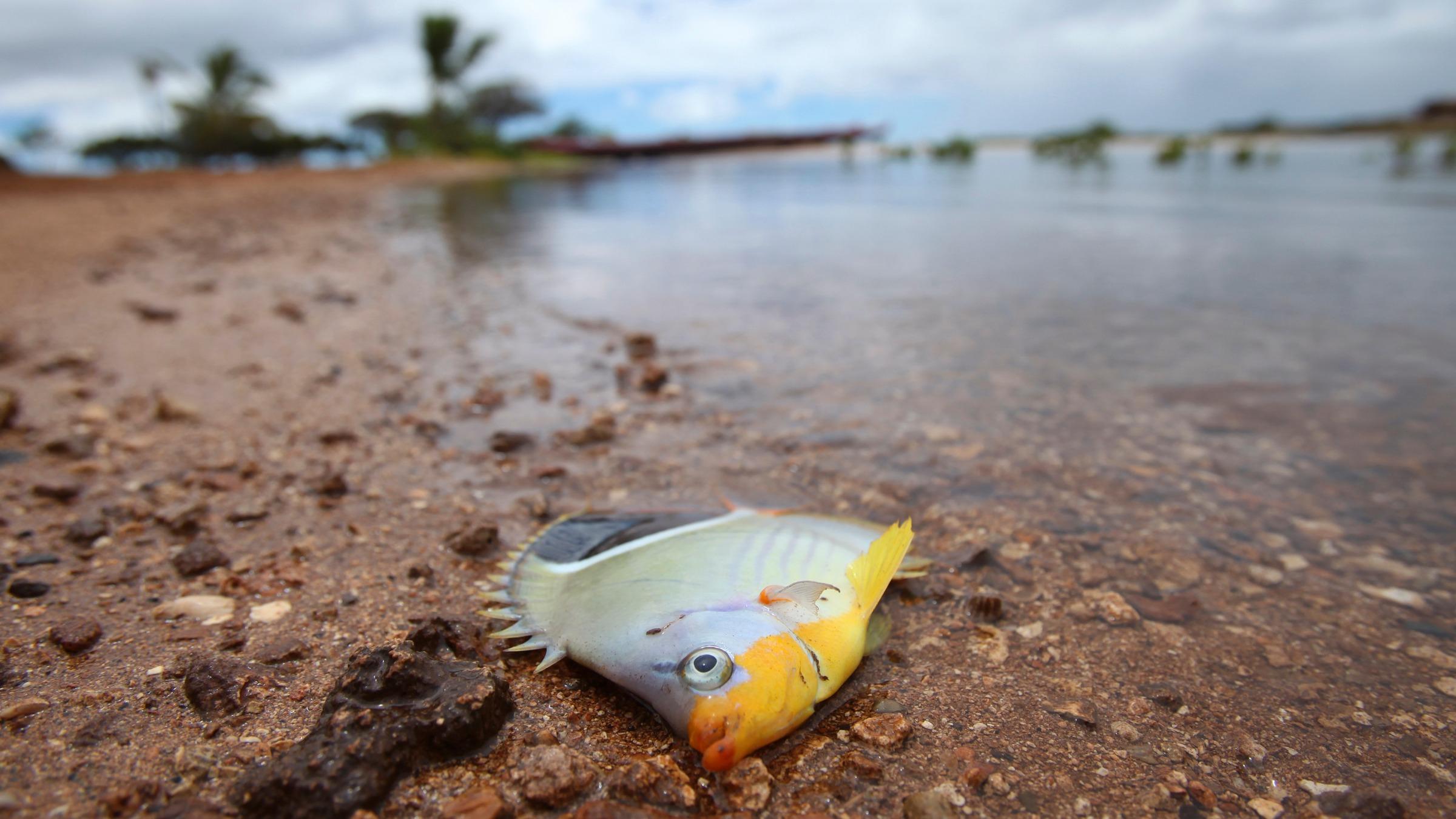 MolassesSpill-Hawaii