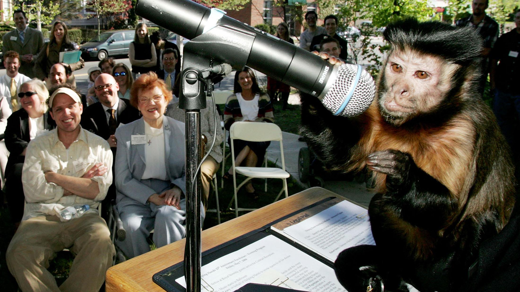 portfolio investor monkey risk taking