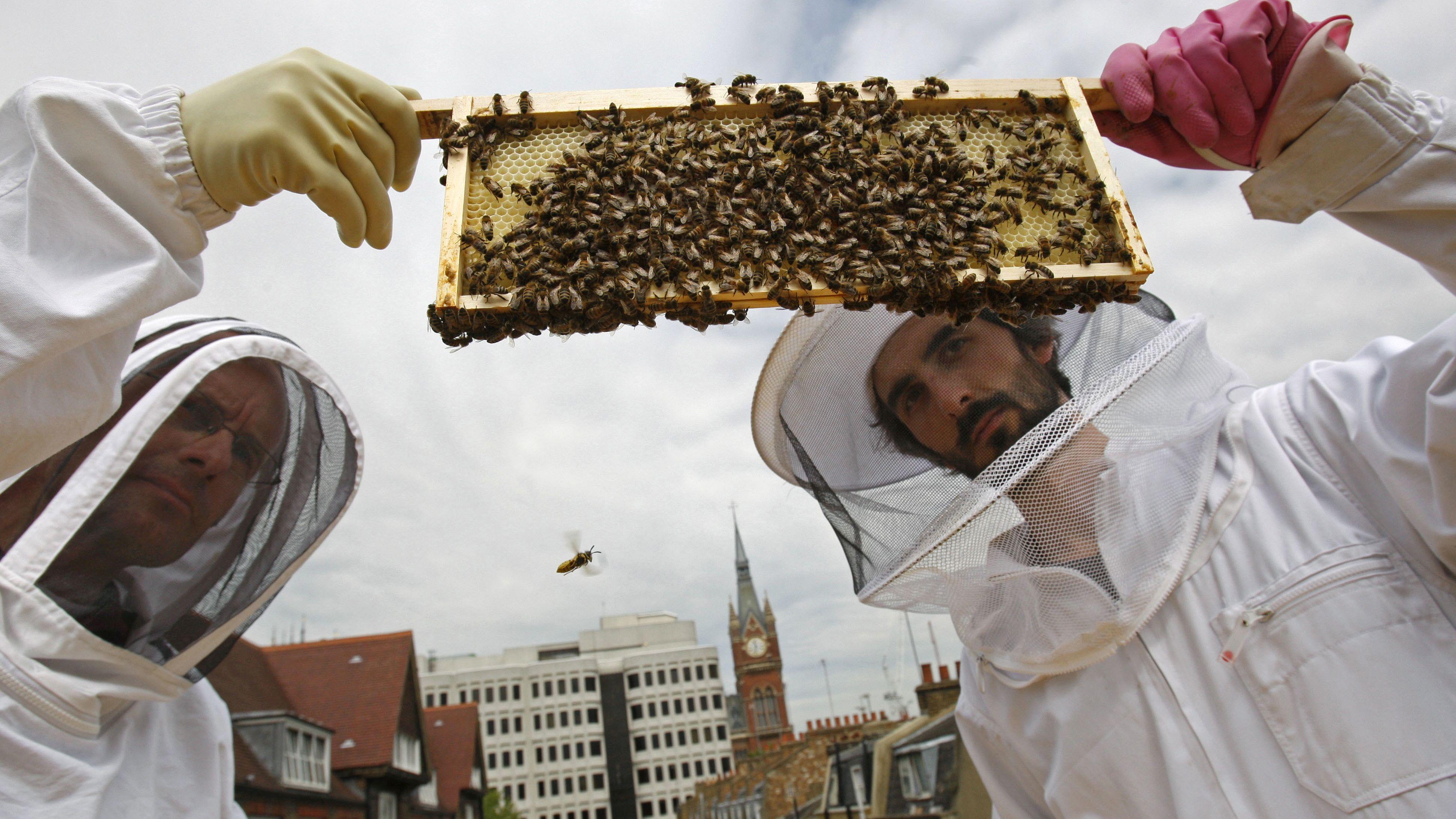 BRITAIN BEES