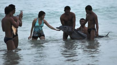 Tourists take pictures of a stranded dolphin at a beach in Sanya, Hainan province, June 16, 2013. Before animal rescuers arrived the dolphin was raised in and out of the water for tourists to have pictures taken with it, the animal died soon after, reported local media. Picture taken June 16, 2013. REUTERS/Stringer