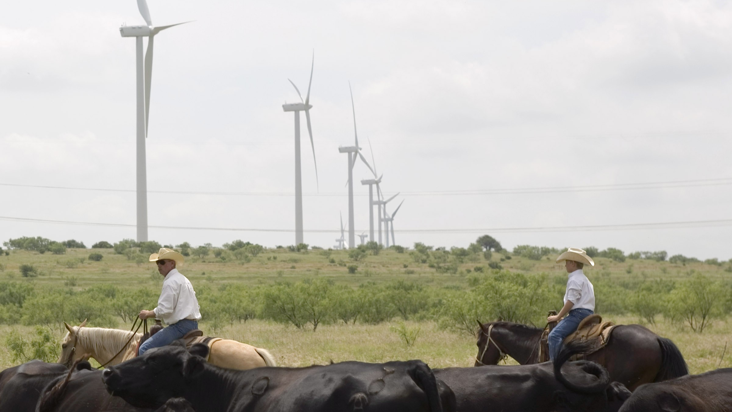 ABILENE, TX - JUNE 9:  Clifton Brandon, 43 years, left, and his 10 year old son, Teagan, round up part of their 300-head of black angus cattle on the Lone Star Wind Farm on June 9, 2007, 17 miles north of Abilene, Texas. The Brandon family leases and manages the cattle ranch they have lived on for 19 years and have no issues with the 240 foot wind towers they see every day on the owner's property. The Lone Star Wind Farm, into its second phase, is spread over 40,000 acres of ranch land with 7 landowners. The 400 megawatt project, owned by Horizon Wind Energy, uses 200 Spanish-built Gamesa 2 MW turbines set on top of 250 foot towers. The ranchers are compensated by a series of easement payments for underground cable collection, access roads, tower base areas, electricity substations and deer hunting restriction credits in areas under construction. Revenue per tower can range from $5,000 to $50,000 per month per tower depending on the variable wind strengths. Abilene and central West Texas is considered a major area for wind power making Texas the largest producer of wind power in the US. The power from the wind farm is connected into TXU's nearby overhead power lines. More than 20 states have requirements that utilities use some percentage of renewable power, and talk is increasing in Washington of enacting a federal standard for utilities and eventually some kind of carbon tax to penalize the use of fossil fuels that produce global warming gases. (Photo by Robert Nickelsberg/Getty Images)