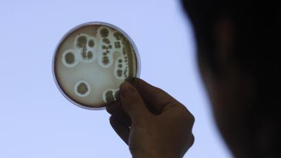 Specialist Jelena Kovalkova looks at a petri dish as she works to isolate the Escherichia coli (E.coli) bacteria strain at the Institute of Food Safety, Animal Health and Environment in Riga June 9, 2011. More than 1,600 people have been infected by a toxic strain of E.coli bacteria that has killed at least 17 and may be the deadliest yet in human history. Latvian government officials on Thursday informed media of stringent monitoring and control over its food sources, and the country has yet to be hit with any E.coli related cases. REUTERS/Ints Kalnins