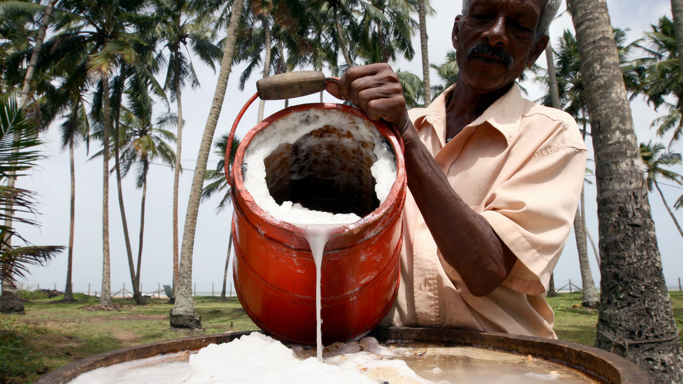 Worker pours toddy from his toddy pot after collecting the sap from a coconut palm tree in order to make palm wine, or toddy, as it is locally known on June 11, 2012 in Kalutara, Sri Lanka. Palm Wine is made by fermenting the collected sap from Palm trees, and is a popular drink across Asia and some parts of Africa. (Photo by Buddhika Weerasinghe/Getty Images