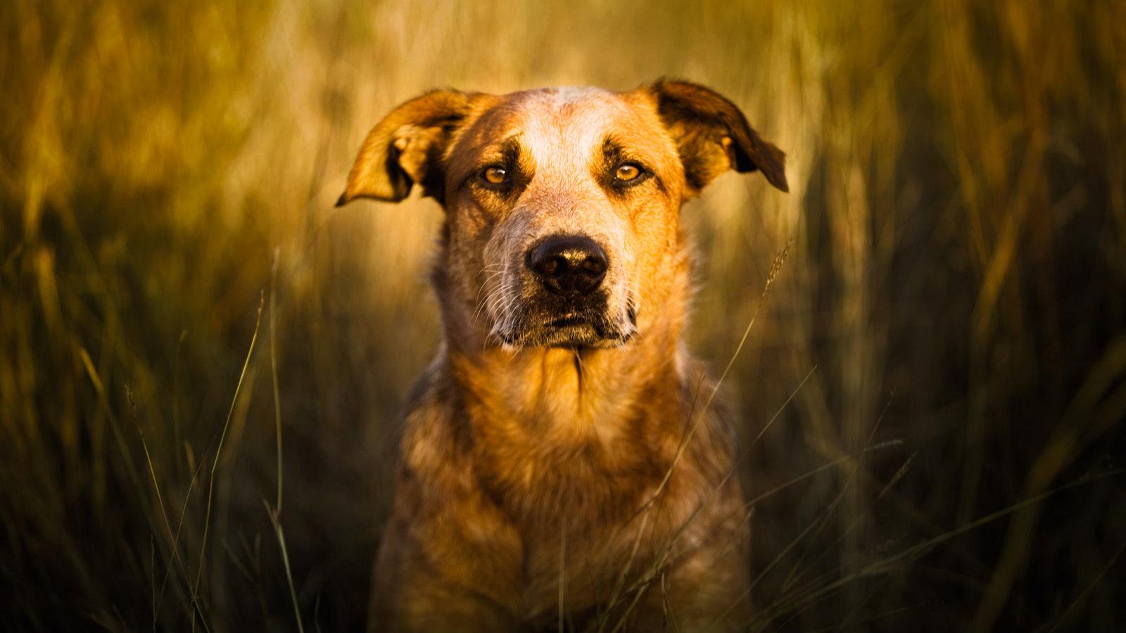 dogs main Richard_Schultz. jpg