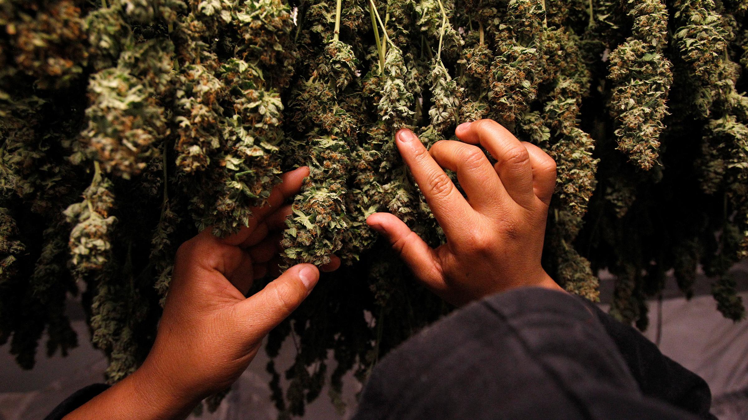 Marijuana Uruguay Paraguay
