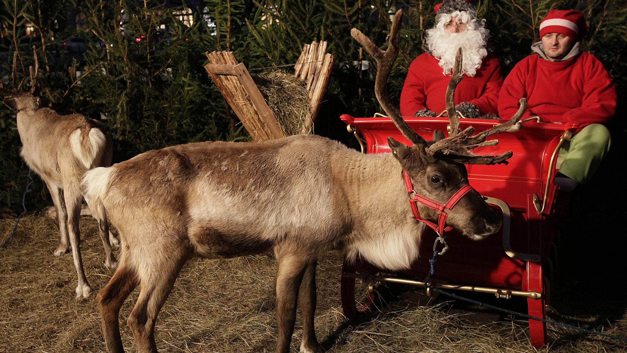 reindeer AP Photo Czarek Sokolowski