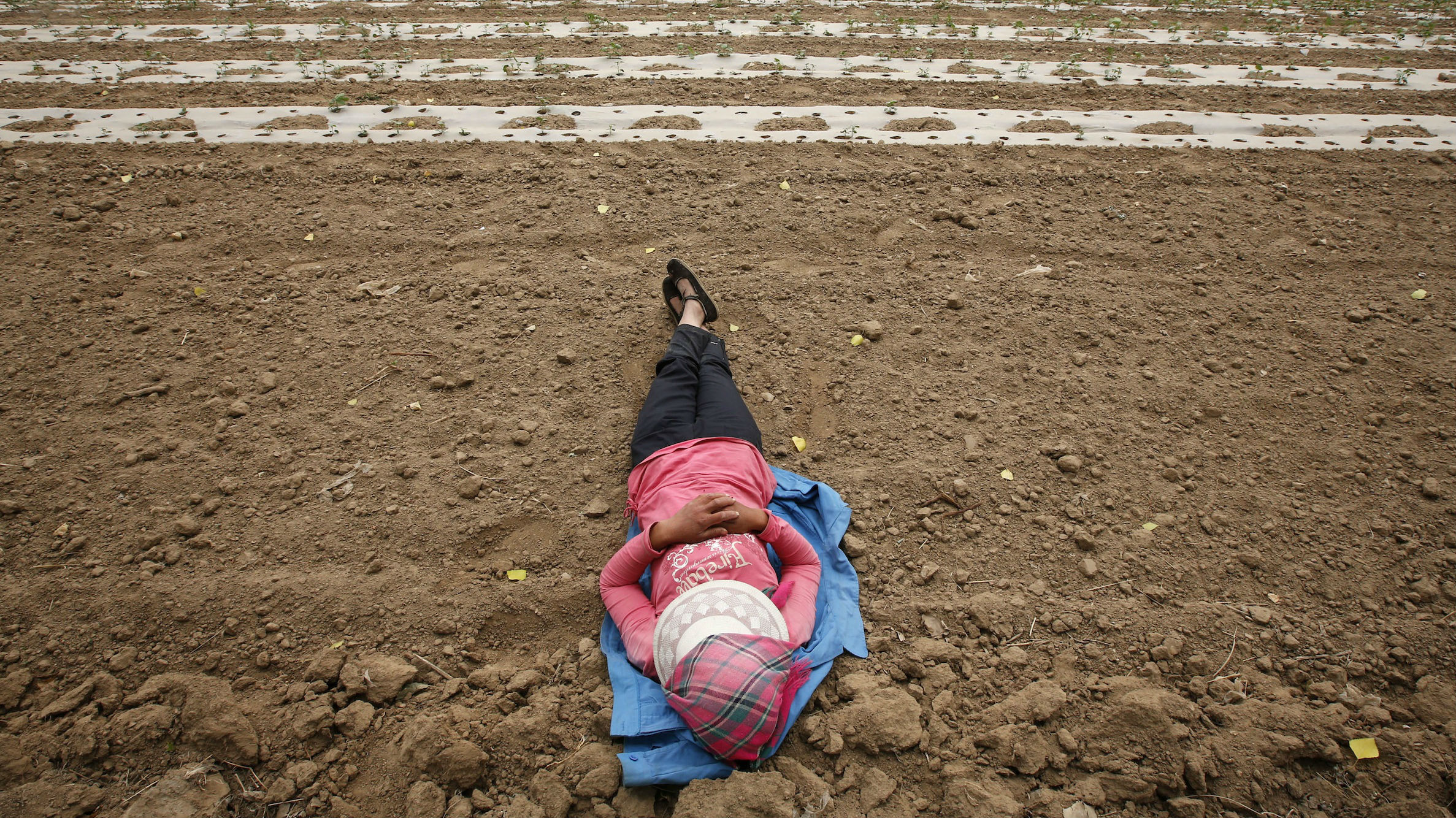 chinese farmer laying down web