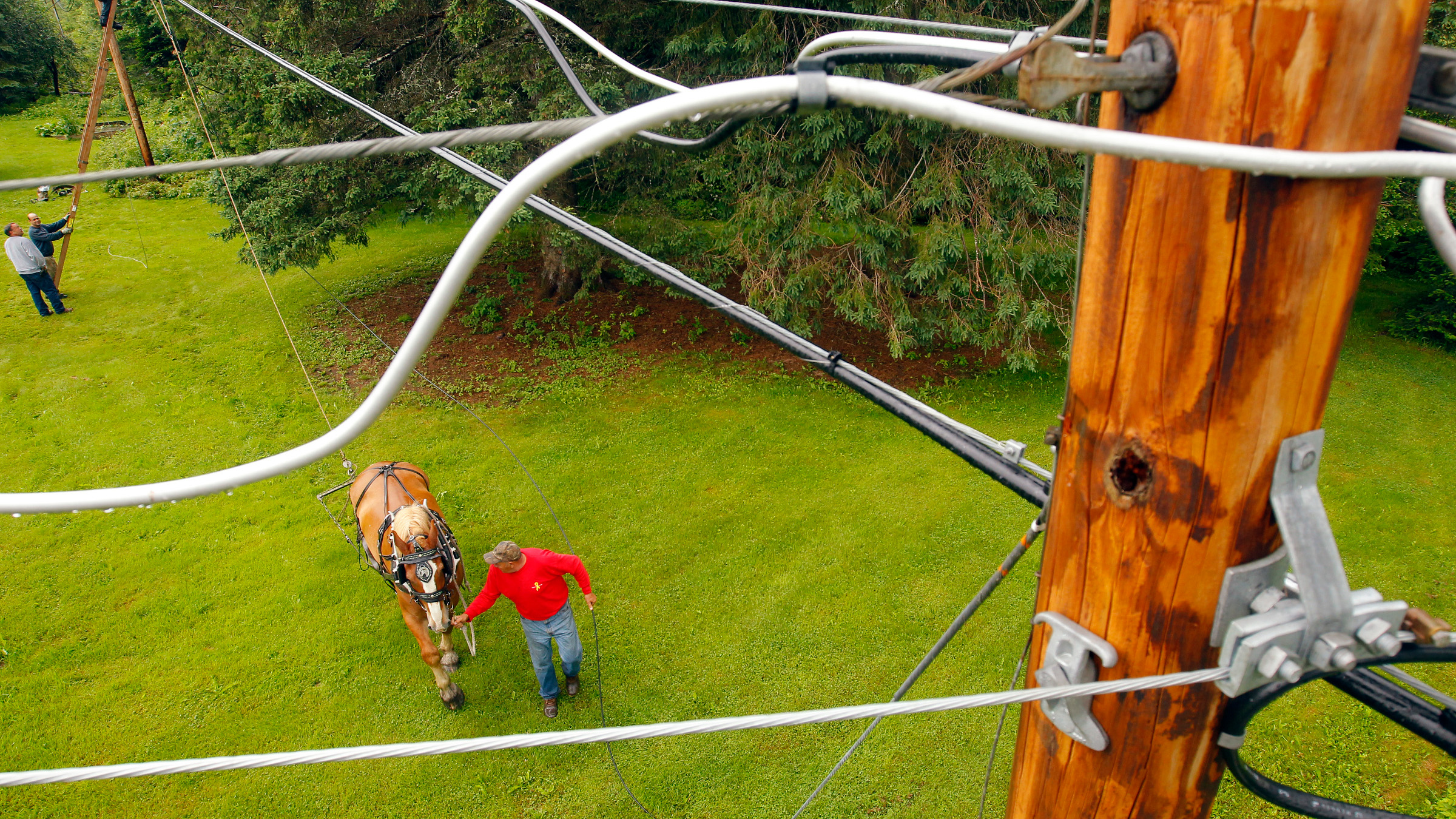 DATE IMPORTED:June 27, 2011Claude Desmarais and his Belgian draft horse Fred pull fiber optic cables between utility poles in East Burke, Vermont June 24, 2011. Fairpoint Communication hires Desmarais and Fred to pull fiber optic cable through difficult terrain in a effort to bring high speed internet to all of Vermont by 2013. Photo taken June 24.