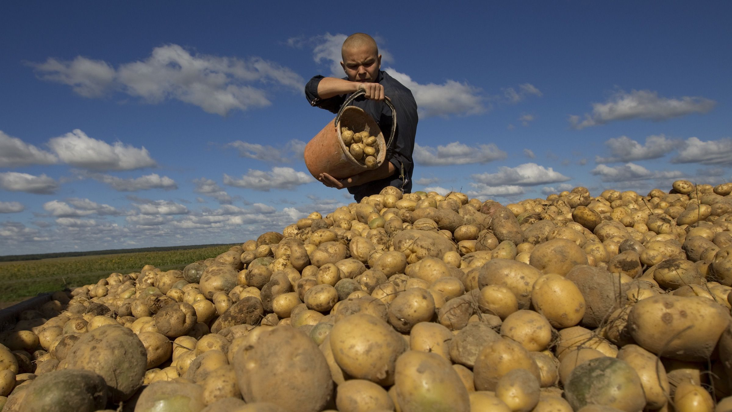 A Belarussian student gathers and loads potatoes on a field in a state-owned farm near the village of Timki, some 80 km (50 miles) east of Minsk September 5, 2013. The students receive 60,000 rubles ($5.5) for four hours' work in harvesting the farm, as well as vegetables for their schools' kitchens. REUTERS/Vasily Fedosenko (BELARUS - Tags: AGRICULTURE SOCIETY EDUCATION) - RTX1381Y
