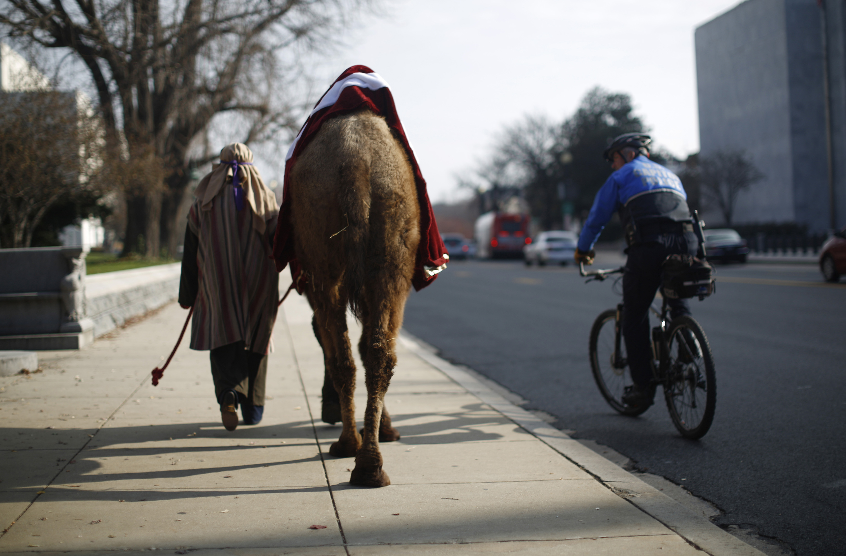 """A camel, part of a nativity scene procession, and its handler are escorted by a bicycle policeman past the U.S. Library of Congress in Washington December 3, 2013. The religious group """"Faith and Action"""" held their annual """"Live Nativity on Capitol Hill"""" on Tuesday to exercise their first amendment rights. REUTERS/Jason Reed (UNITED STATES - Tags: POLITICS RELIGION CITYSCAPE ANIMALS) - RTX162C0"""