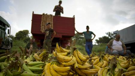 "In this Sept. 30, 2013 photo, banana growers wait next to their truck for customers at the 114th Street Market on the outskirts of Havana, Cuba. ""Here it's always cheaper than in the markets or kiosks"" in the city's crowded neighborhoods, said Argelio Mendez, a government official who runs the market. (AP Photo/Ramon Espinosa"