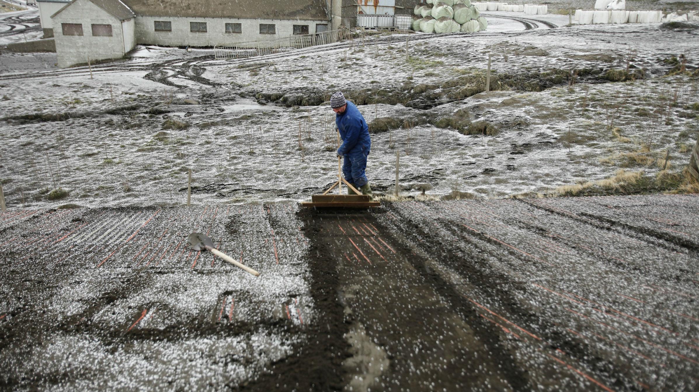 iceland farm web