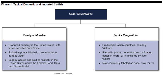 regan - domestic v. imported catfish
