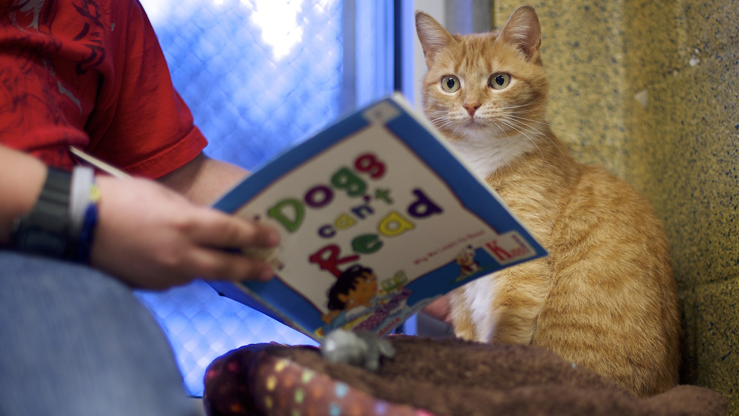 "Desmond Allen reads to ""Ginger,"" a cat up for adoption, during ""The Book Buddies Program"" at the Animal Rescue League of Berks County in Birdsboro, Pennsylvania February 11, 2014. Children in grades 1-8 read to the cats as a way to improve their reading skills and gain confidence.  The shelter animals can be a non-evaluative presence that can provide support and comfort to participants without judging them.  Students showed sustained focus and maintained a higher state of awareness, as well as improved attitudes toward school, according to researchers at Tufts University.  Photo taken February 11, 2014.  REUTERS/Mark Makela  (UNITED STATES - Tags: SOCIETY EDUCATION ANIMALS TPX IMAGES OF THE DAY) - RTX18O27"