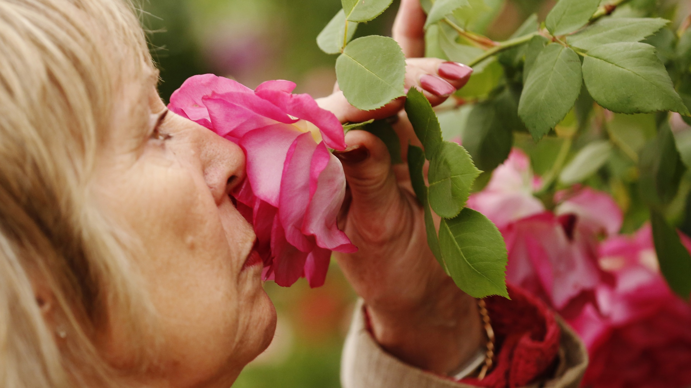 A visitor smells a Sir Paul Smith climbing rose at the Chelsea Flower Show in London May 21, 2013. REUTERS/Luke MacGregor (BRITAIN - Tags: SOCIETY) - RTXZVH9